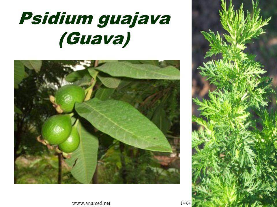 www.anamed.net 14/64 Psidium guajava (Guava)