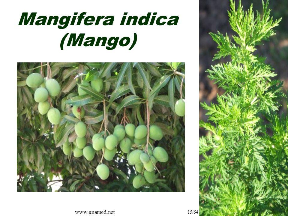 www.anamed.net 15/64 Mangifera indica (Mango)