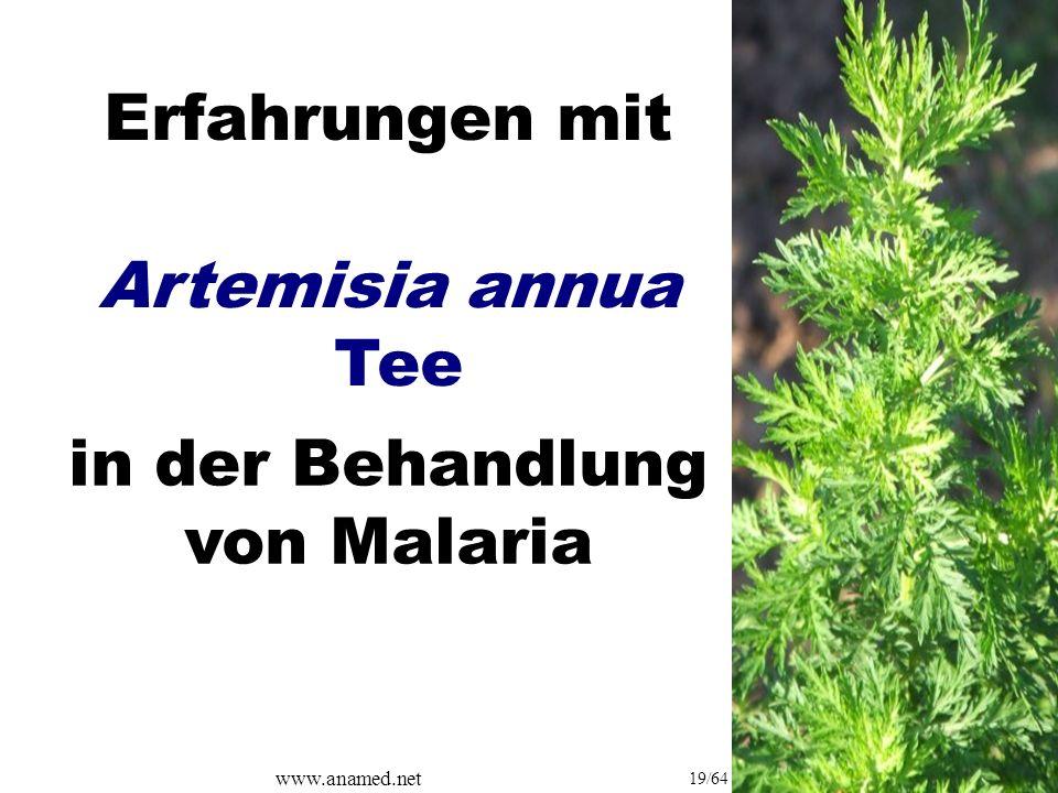 www.anamed.net 19/64 Erfahrungen mit Artemisia annua Tee in der Behandlung von Malaria