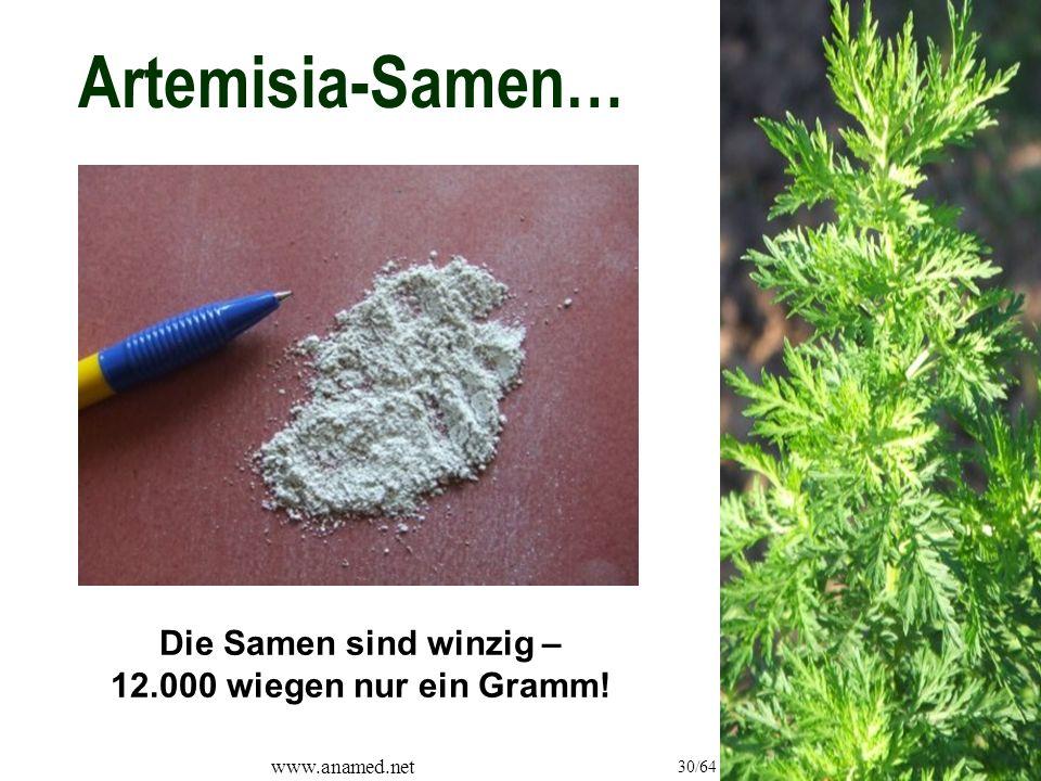 www.anamed.net 30/64 Artemisia-Samen… Die Samen sind winzig – 12.000 wiegen nur ein Gramm!