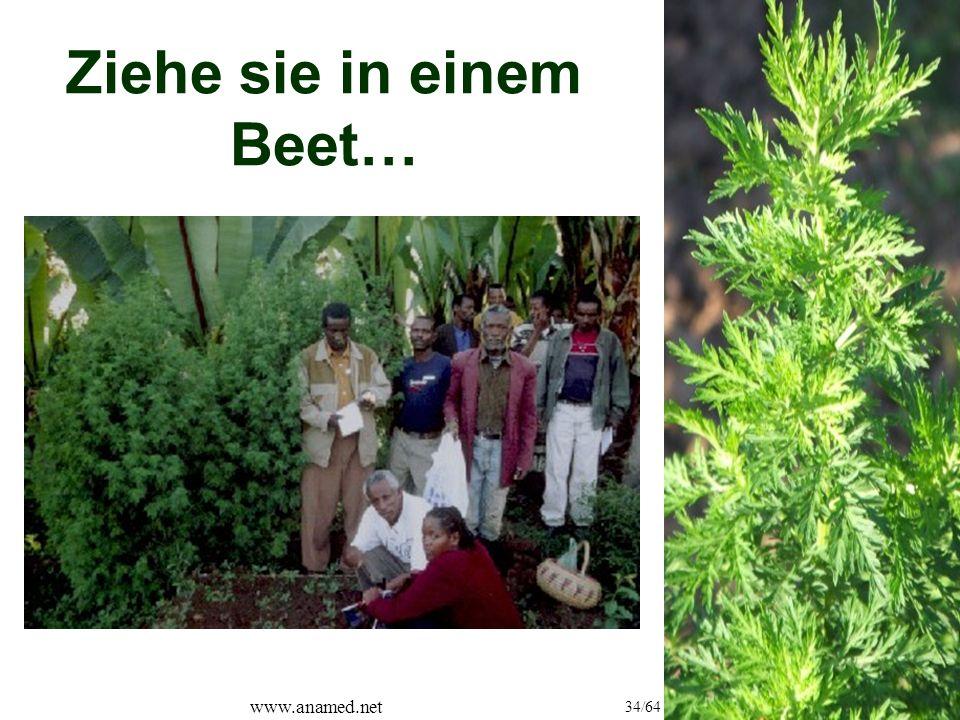 www.anamed.net 34/64 Ziehe sie in einem Beet…