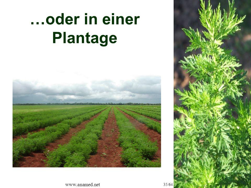 www.anamed.net 35/64 …oder in einer Plantage