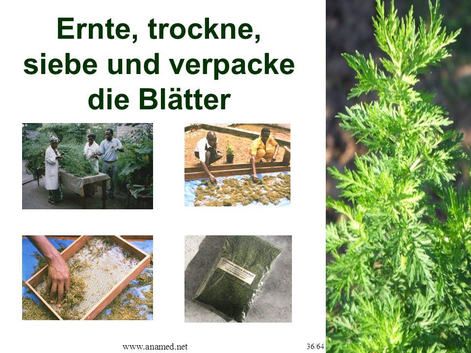 www.anamed.net 36/64 Ernte, trockne, siebe und verpacke die Blätter