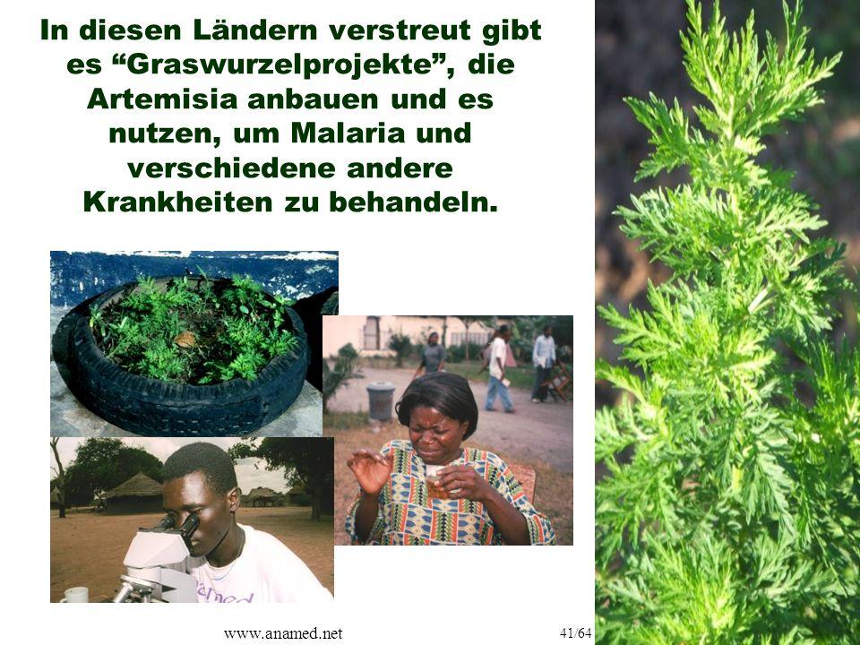 www.anamed.net 41/64 In diesen Ländern verstreut gibt es Graswurzelprojekte , die Artemisia anbauen und es nutzen, um Malaria und verschiedene andere Krankheiten zu behandeln.