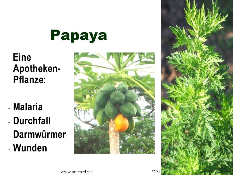 www.anamed.net 59/64 Papaya Eine Apotheken- Pflanze: - Malaria - Durchfall - Darmwürmer - Wunden