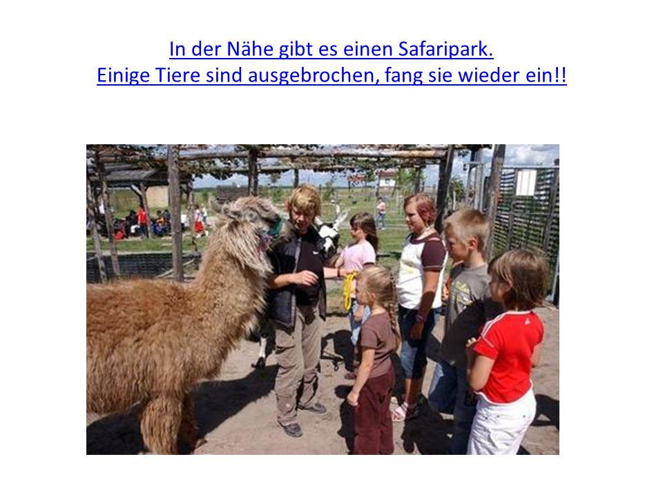 In der Nähe gibt es einen Safaripark. Einige Tiere sind ausgebrochen, fang sie wieder ein!!
