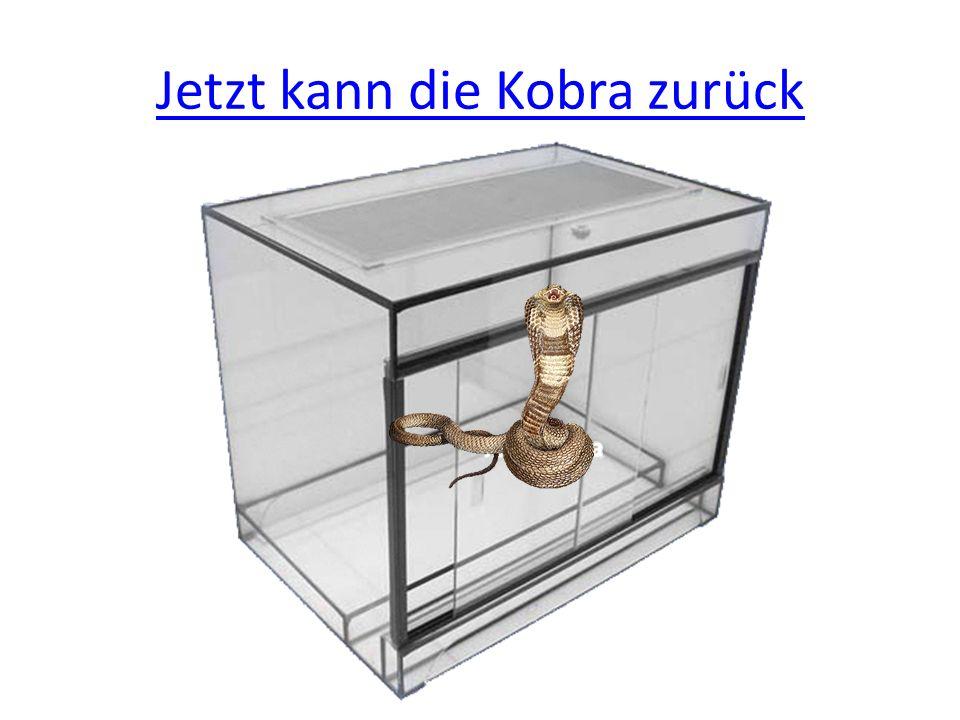 Jetzt kann die Kobra zurück