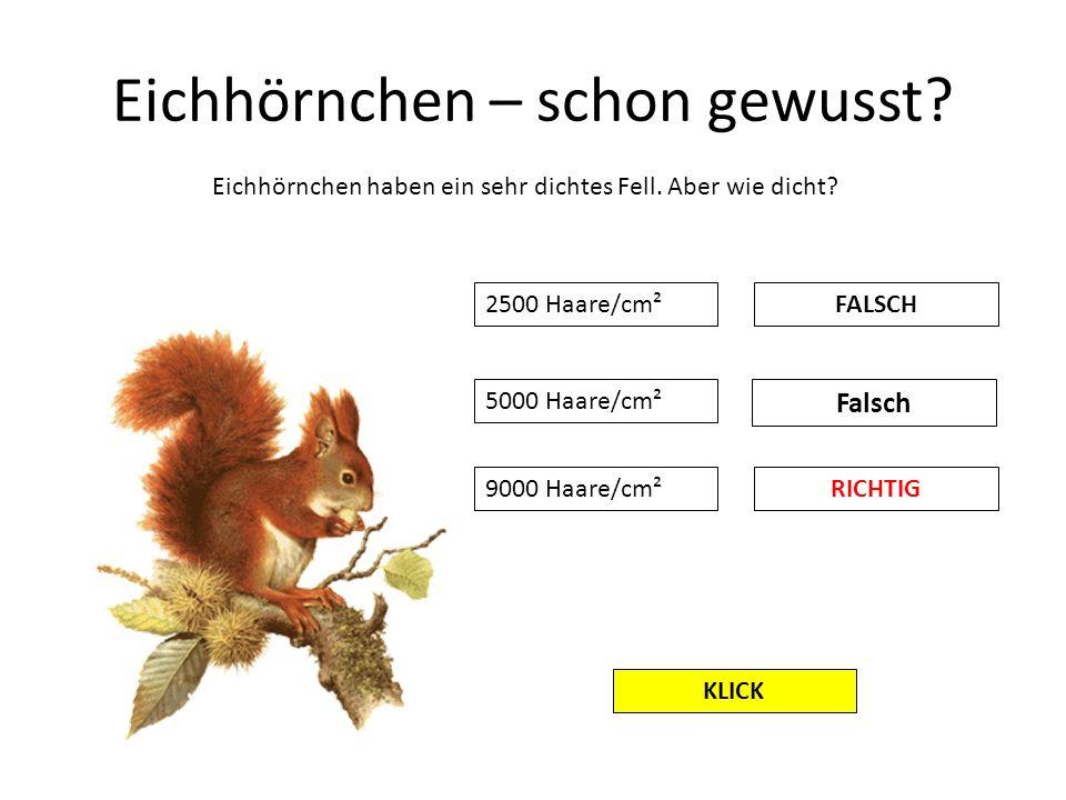 Eichhörnchen – schon gewusst? Eichhörnchen haben ein sehr dichtes Fell. Aber wie dicht? 2500 Haare/cm² 5000 Haare/cm² 9000 Haare/cm²RICHTIG Falsch FAL