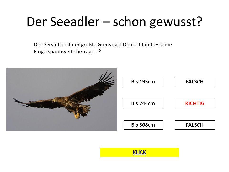 Der Seeadler – schon gewusst? KLICK Der Seeadler ist der größte Greifvogel Deutschlands – seine Flügelspannweite beträgt …? FALSCHBis 195cm RICHTIG FA