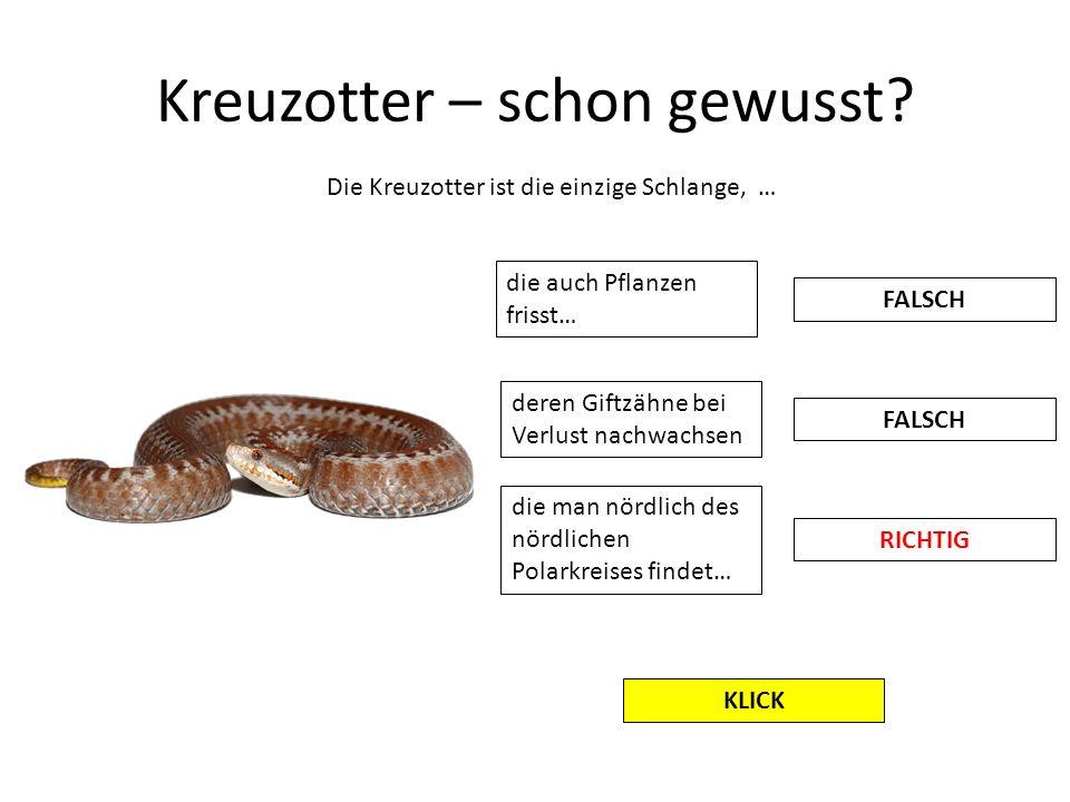 Kreuzotter – schon gewusst? Die Kreuzotter ist die einzige Schlange, … die auch Pflanzen frisst… FALSCH RICHTIG deren Giftzähne bei Verlust nachwachse