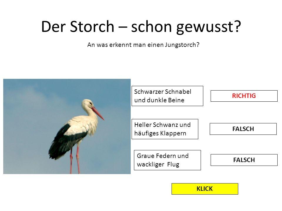 Der Storch – schon gewusst? An was erkennt man einen Jungstorch? Schwarzer Schnabel und dunkle Beine Heller Schwanz und häufiges Klappern Graue Federn