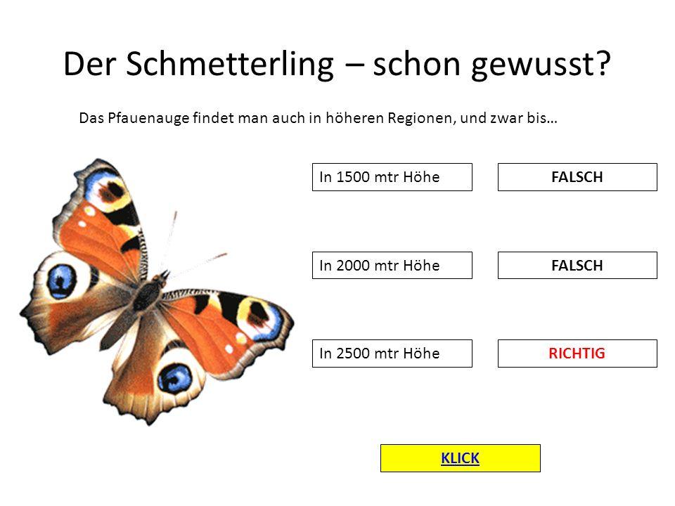 Der Schmetterling – schon gewusst? Das Pfauenauge findet man auch in höheren Regionen, und zwar bis… In 1500 mtr Höhe RICHTIG FALSCH In 2000 mtr Höhe