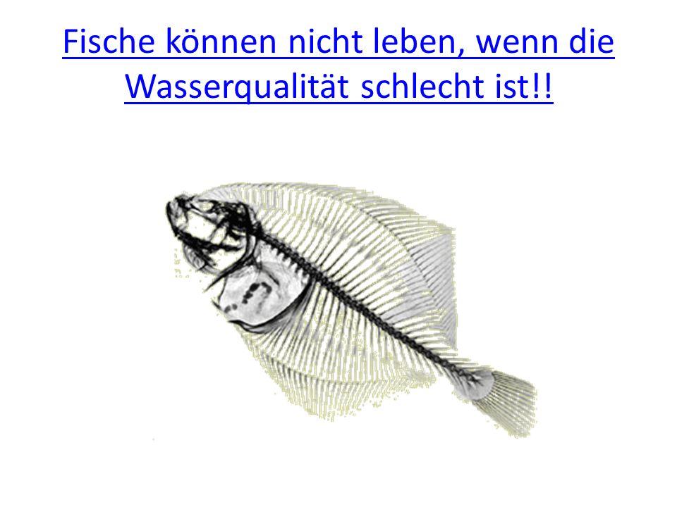 Fische können nicht leben, wenn die Wasserqualität schlecht ist!!