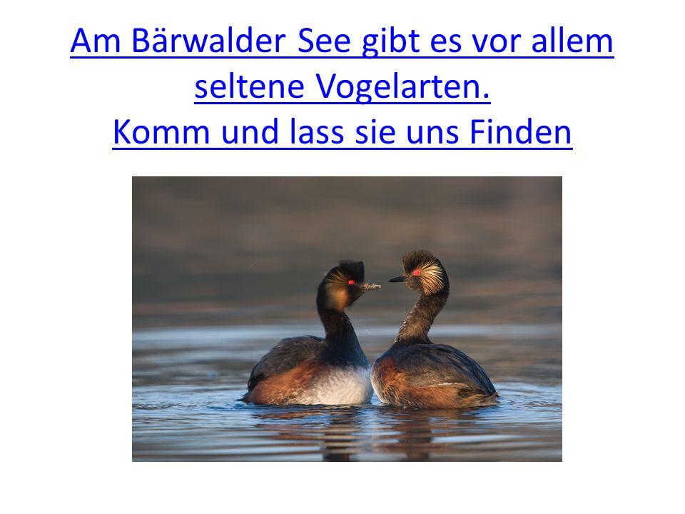 Am Bärwalder See gibt es vor allem seltene Vogelarten. Komm und lass sie uns Finden