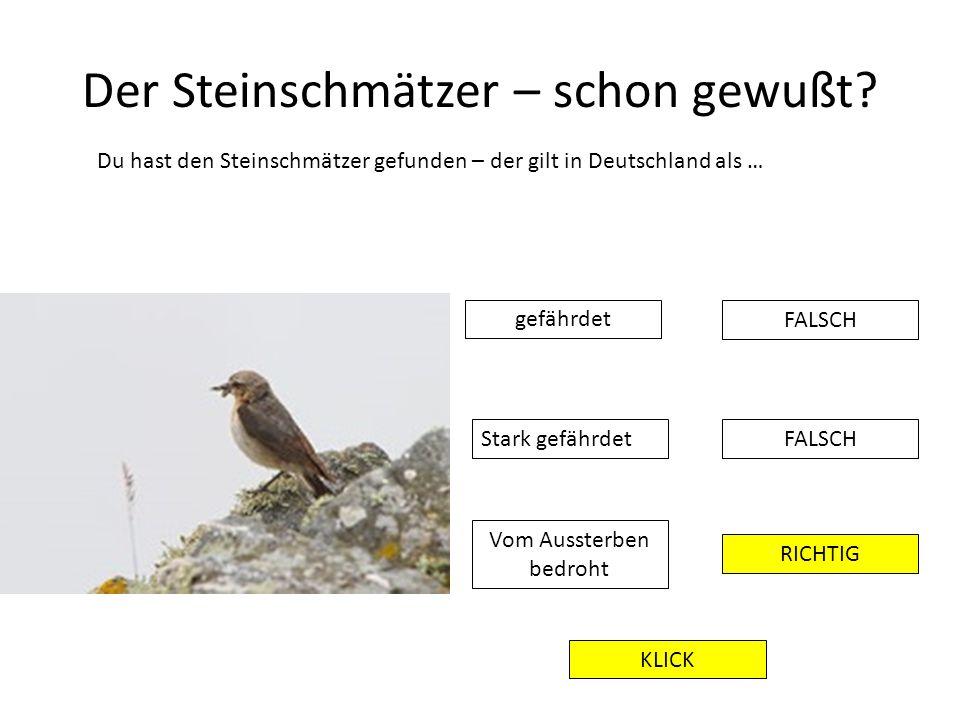 Der Steinschmätzer – schon gewußt? Du hast den Steinschmätzer gefunden – der gilt in Deutschland als … FALSCH RICHTIG gefährdet Stark gefährdet Vom Au