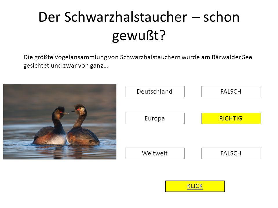 Der Schwarzhalstaucher – schon gewußt? DeutschlandFALSCH RICHTIG FALSCH Europa Weltweit KLICK Die größte Vogelansammlung von Schwarzhalstauchern wurde