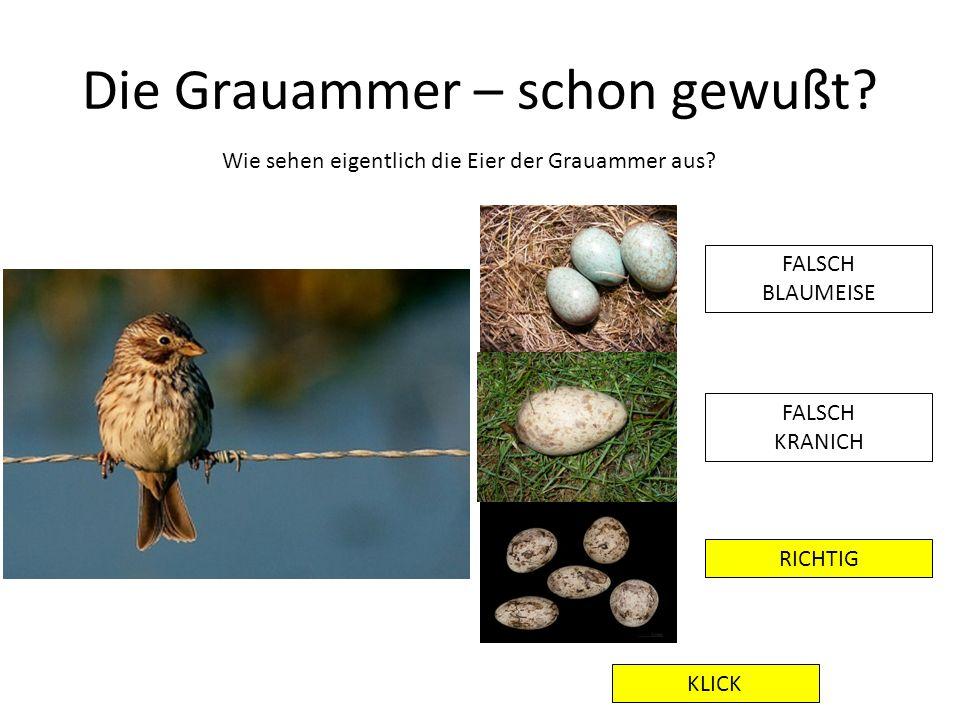 Die Grauammer – schon gewußt? Wie sehen eigentlich die Eier der Grauammer aus? FALSCH BLAUMEISE FALSCH KRANICH RICHTIG KLICK