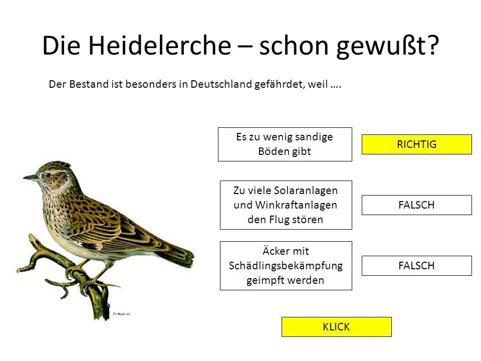 Die Heidelerche – schon gewußt? Der Bestand ist besonders in Deutschland gefährdet, weil …. Es zu wenig sandige Böden gibt RICHTIG FALSCH Zu viele Sol