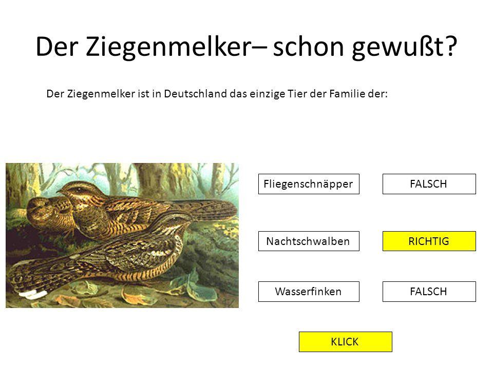 Der Ziegenmelker– schon gewußt? Der Ziegenmelker ist in Deutschland das einzige Tier der Familie der: FALSCHFliegenschnäpper RICHTIG FALSCH Nachtschwa