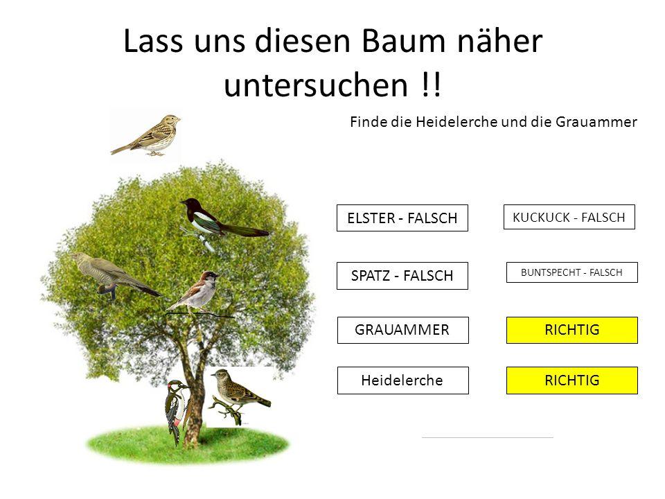 Lass uns diesen Baum näher untersuchen !! Finde die Heidelerche und die Grauammer KUCKUCK - FALSCH ELSTER - FALSCH BUNTSPECHT - FALSCH RICHTIG SPATZ -