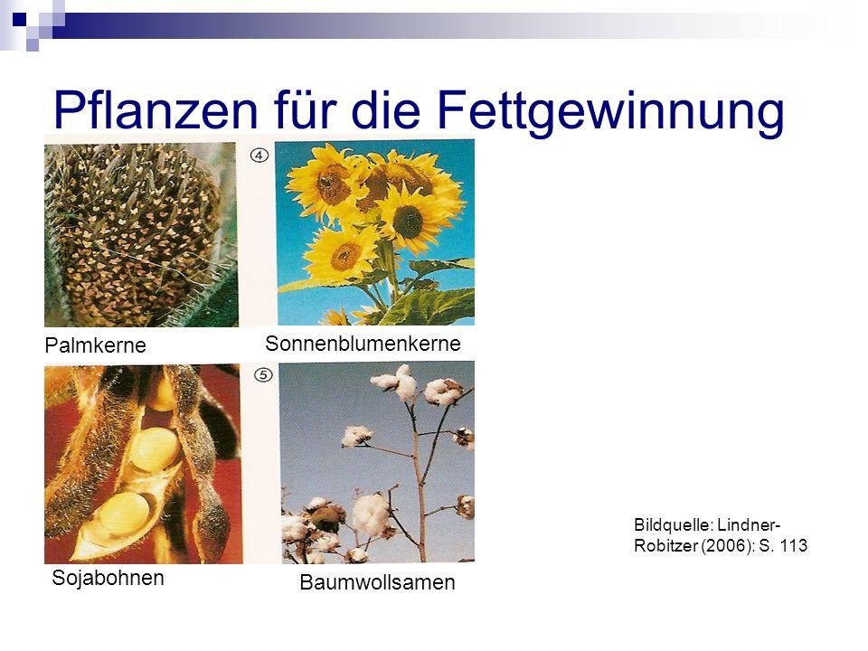 Pflanzen für die Fettgewinnung Palmkerne Sojabohnen Baumwollsamen Sonnenblumenkerne Bildquelle: Lindner- Robitzer (2006): S.
