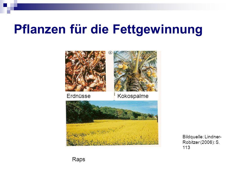 Pflanzen für die Fettgewinnung ErdnüsseKokospalme Raps Bildquelle: Lindner- Robitzer (2006): S. 113