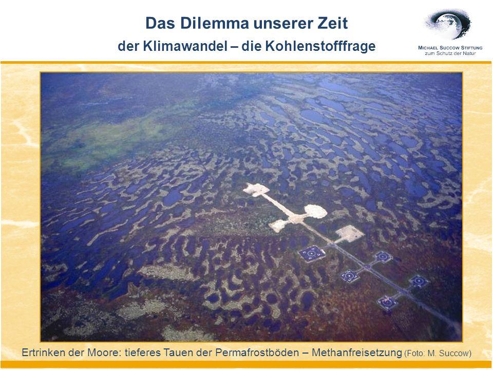 Ertrinken der Moore: tieferes Tauen der Permafrostböden – Methanfreisetzung (Foto: M. Succow) Das Dilemma unserer Zeit der Klimawandel – die Kohlensto