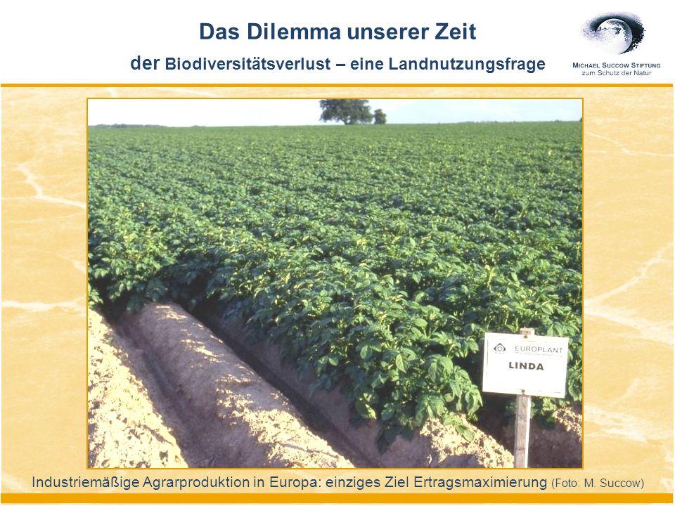 Industriemäßige Agrarproduktion in Europa: einziges Ziel Ertragsmaximierung (Foto: M. Succow) Das Dilemma unserer Zeit der Biodiversitätsverlust – ein