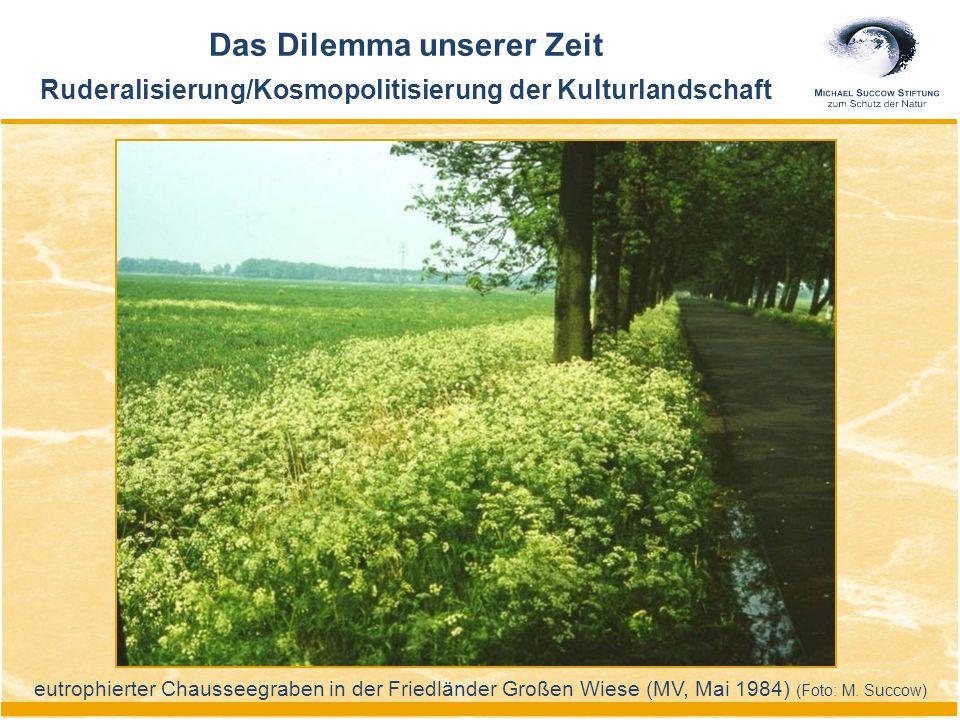 eutrophierter Chausseegraben in der Friedländer Großen Wiese (MV, Mai 1984) (Foto: M. Succow) Das Dilemma unserer Zeit Ruderalisierung/Kosmopolitisier