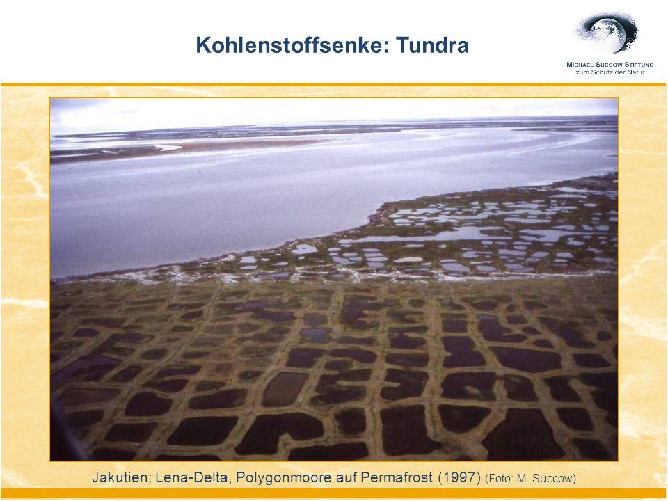 Kohlenstoffsenke: Tundra Jakutien: Lena-Delta, Polygonmoore auf Permafrost (1997) (Foto: M. Succow)