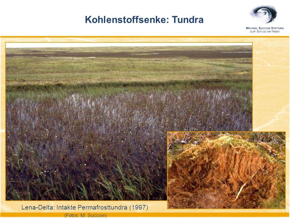 Lena-Delta: Intakte Permafrosttundra (1997) (Fotos: M. Succow) Kohlenstoffsenke: Tundra