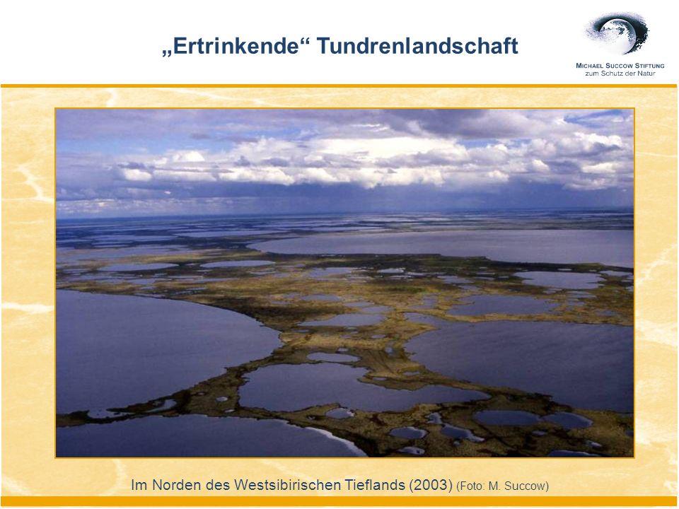 """Im Norden des Westsibirischen Tieflands (2003) (Foto: M. Succow) """"Ertrinkende"""" Tundrenlandschaft"""