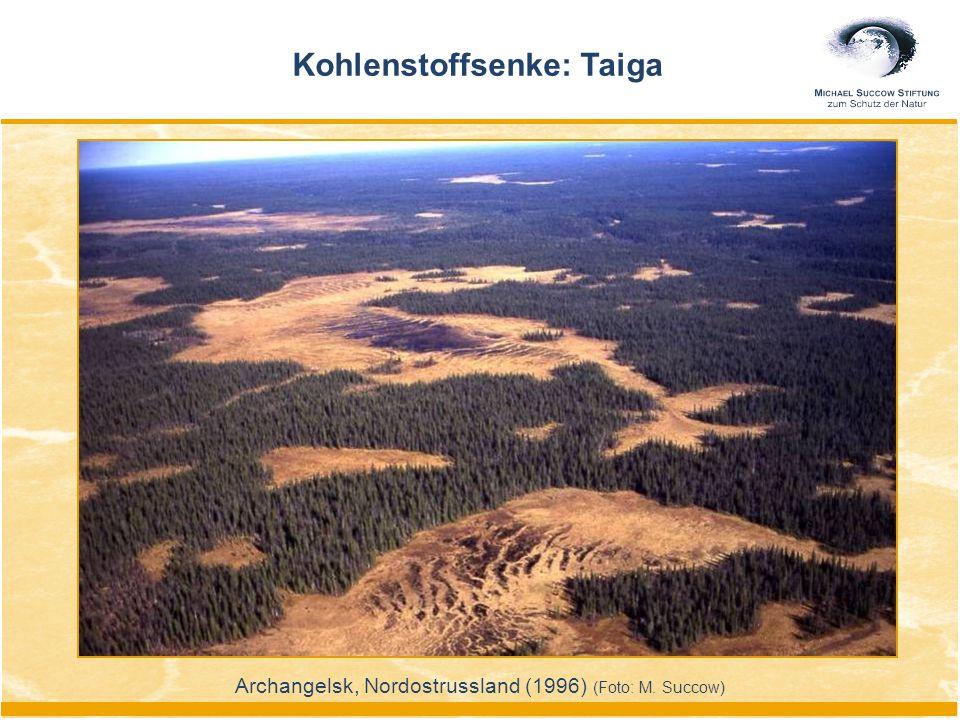 Kohlenstoffsenke: Taiga Archangelsk, Nordostrussland (1996) (Foto: M. Succow)