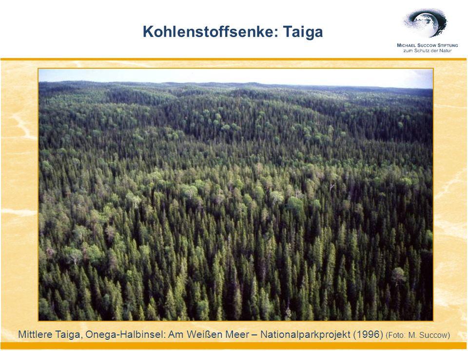 Kohlenstoffsenke: Taiga Mittlere Taiga, Onega-Halbinsel: Am Weißen Meer – Nationalparkprojekt (1996) (Foto: M. Succow)