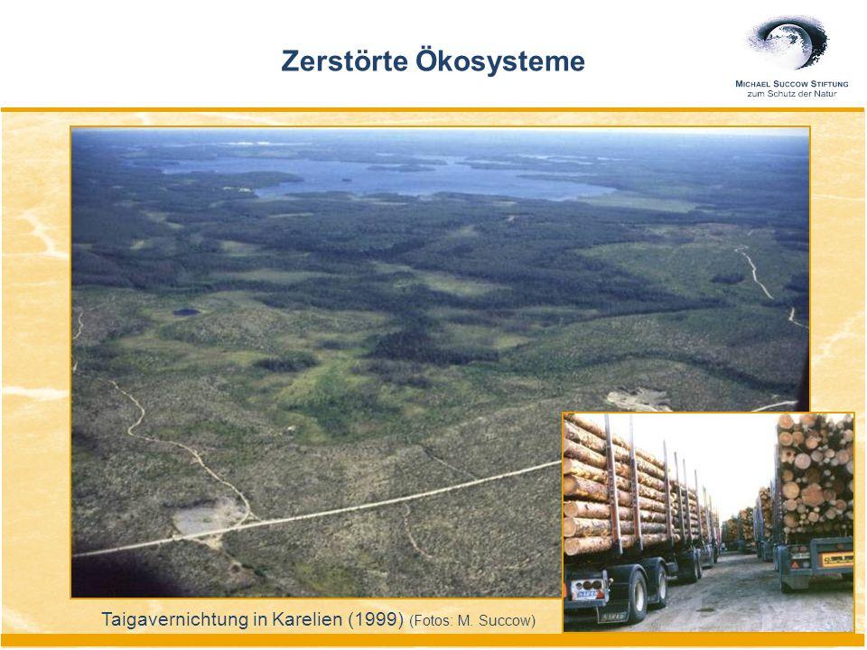 Taigavernichtung in Karelien (1999) (Fotos: M. Succow) Zerstörte Ökosysteme