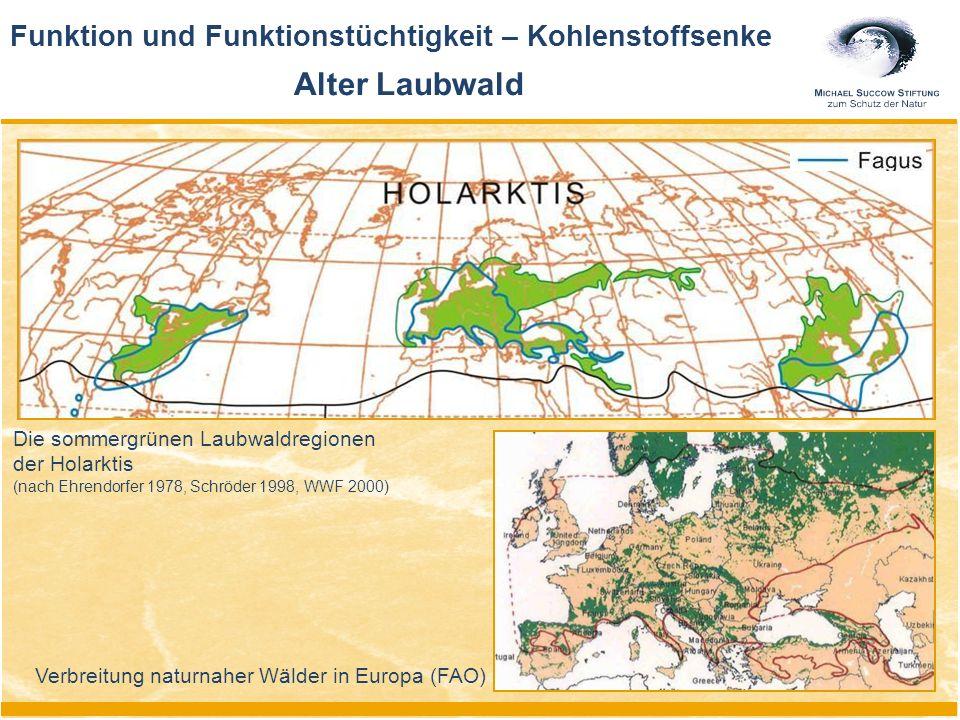 Funktion und Funktionstüchtigkeit – Kohlenstoffsenke Alter Laubwald Verbreitung naturnaher Wälder in Europa (FAO) Die sommergrünen Laubwaldregionen der Holarktis (nach Ehrendorfer 1978, Schröder 1998, WWF 2000)