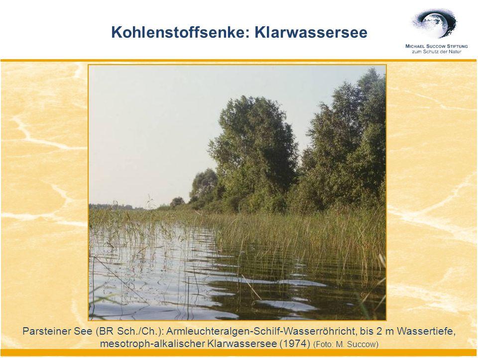 Kohlenstoffsenke: Klarwassersee Parsteiner See (BR Sch./Ch.): Armleuchteralgen-Schilf-Wasserröhricht, bis 2 m Wassertiefe, mesotroph-alkalischer Klarw