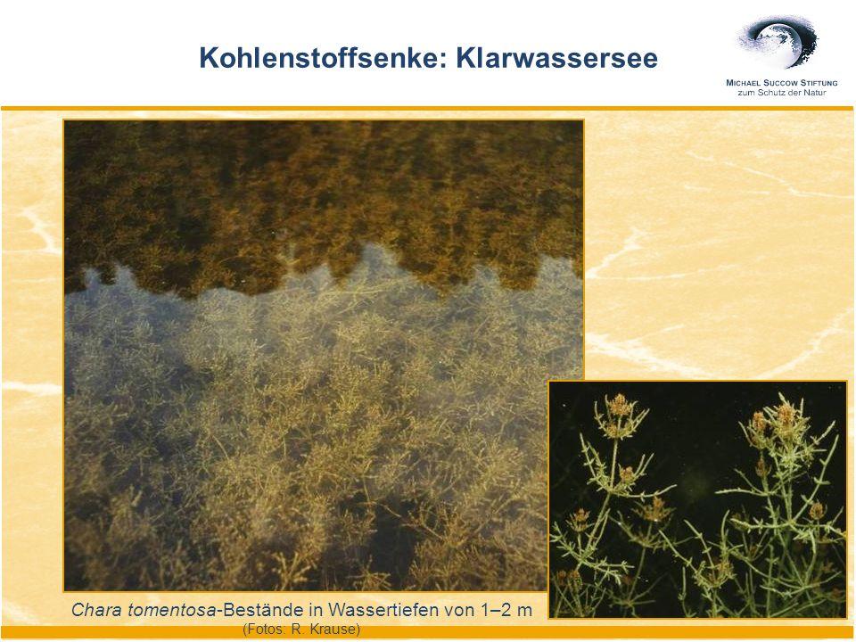 Chara tomentosa-Bestände in Wassertiefen von 1–2 m (Fotos: R. Krause) Kohlenstoffsenke: Klarwassersee