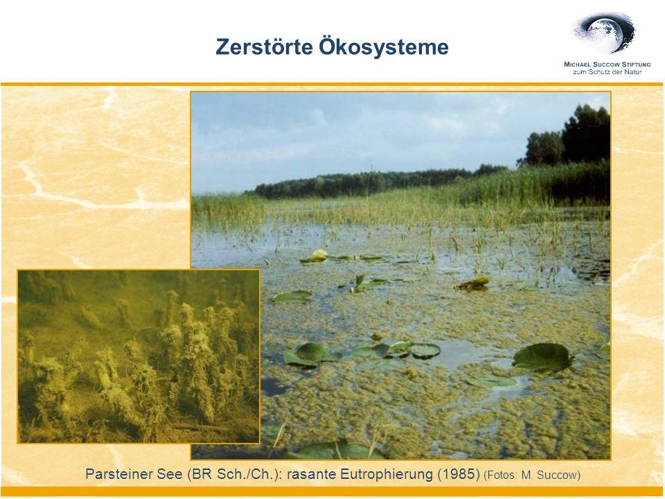 Zerstörte Ökosysteme Parsteiner See (BR Sch./Ch.): rasante Eutrophierung (1985) (Fotos: M. Succow)