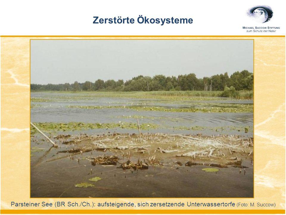 Zerstörte Ökosysteme Parsteiner See (BR Sch./Ch.): aufsteigende, sich zersetzende Unterwassertorfe (Foto: M. Succow)