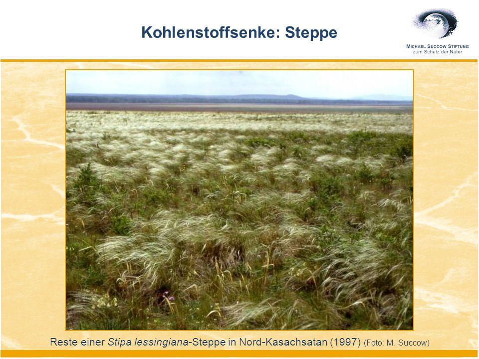 Kohlenstoffsenke: Steppe Reste einer Stipa lessingiana-Steppe in Nord-Kasachsatan (1997) (Foto: M. Succow)