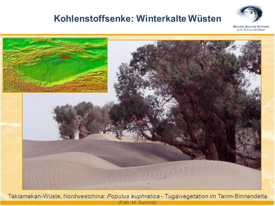 Kohlenstoffsenke: Winterkalte Wüsten Taklamakan-Wüste, Nordwestchina: Populus euphratica - Tugaivegetation im Tarim-Binnendelta (Foto: M. Succow) Tari