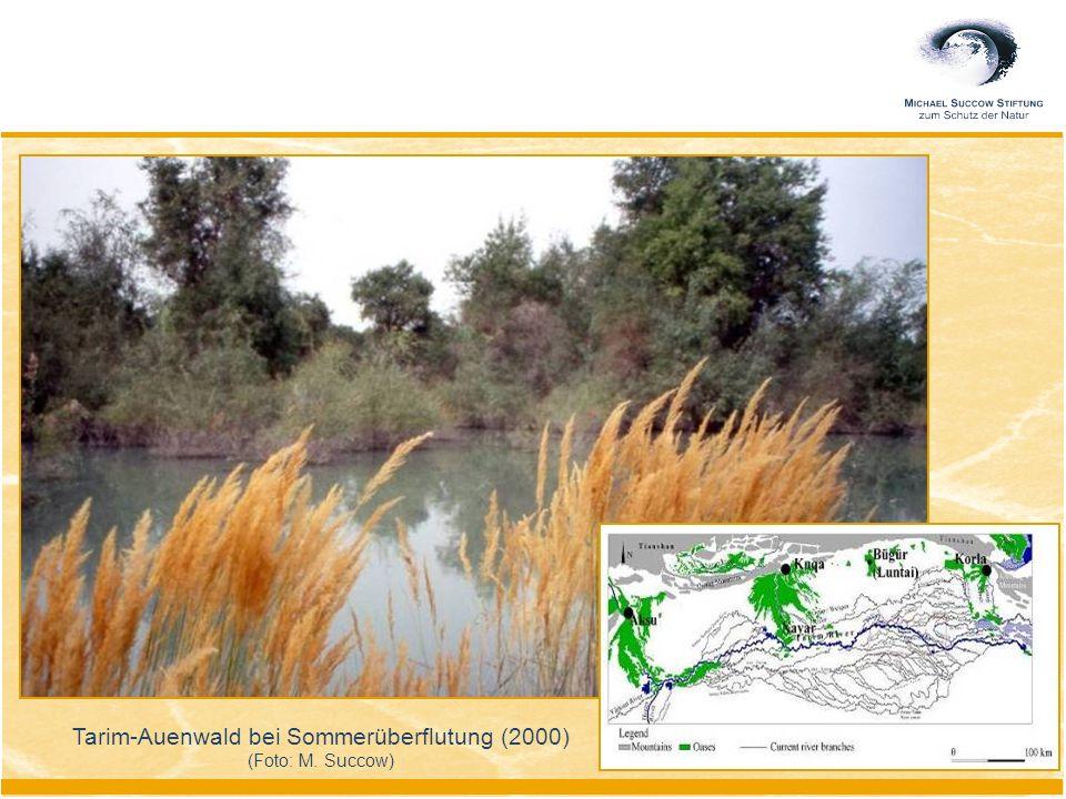 Tarim-Auenwald bei Sommerüberflutung (2000) (Foto: M. Succow)