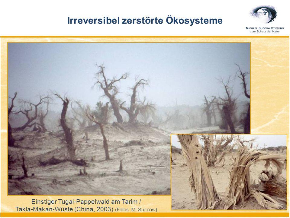 Irreversibel zerstörte Ökosysteme Einstiger Tugai-Pappelwald am Tarim / Takla-Makan-Wüste (China, 2003) (Fotos: M.