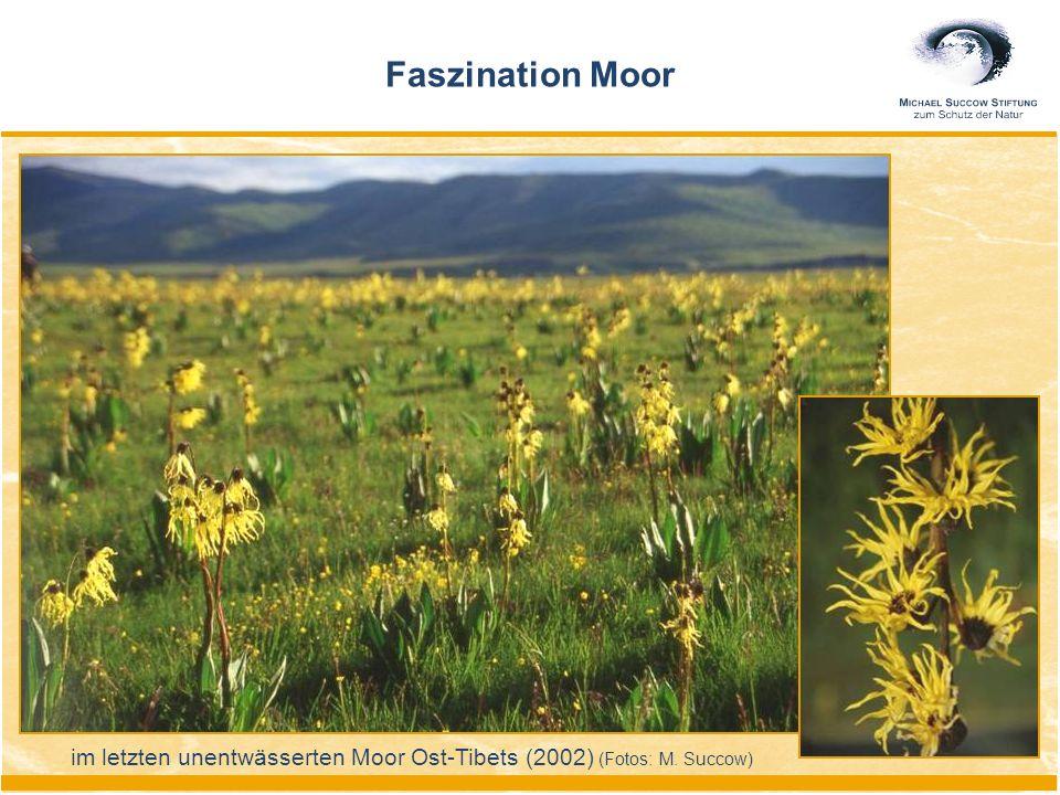 Faszination Moor im letzten unentwässerten Moor Ost-Tibets (2002) (Fotos: M. Succow)