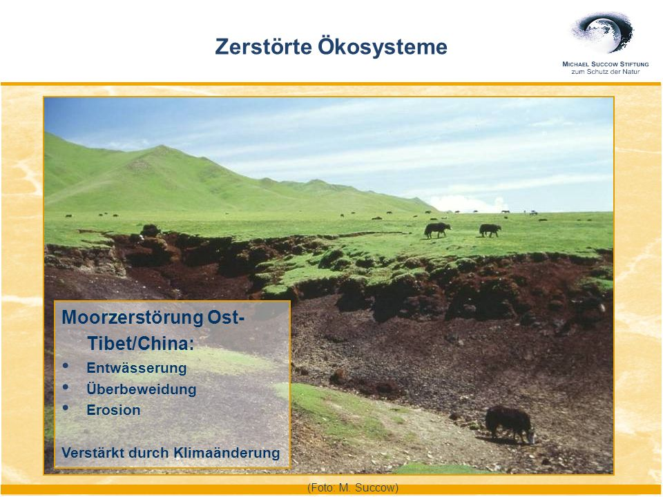 Moorzerstörung Ost- Tibet/China: Entwässerung Überbeweidung Erosion Verstärkt durch Klimaänderung Zerstörte Ökosysteme (Foto: M. Succow)