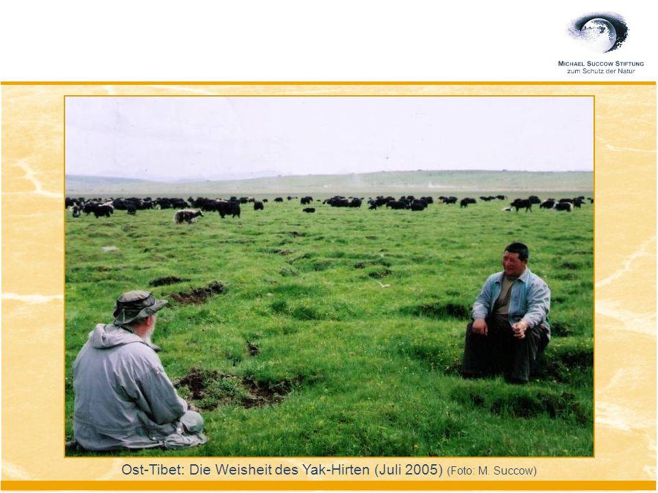Ost-Tibet: Die Weisheit des Yak-Hirten (Juli 2005) (Foto: M. Succow)