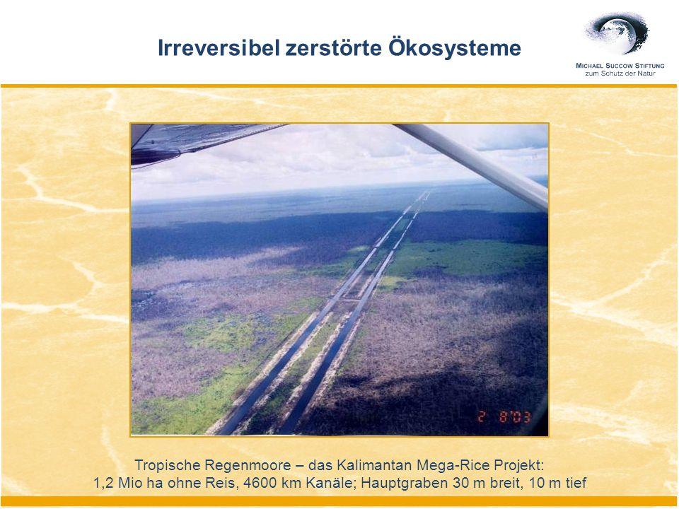 Tropische Regenmoore – das Kalimantan Mega-Rice Projekt: 1,2 Mio ha ohne Reis, 4600 km Kanäle; Hauptgraben 30 m breit, 10 m tief Irreversibel zerstörte Ökosysteme