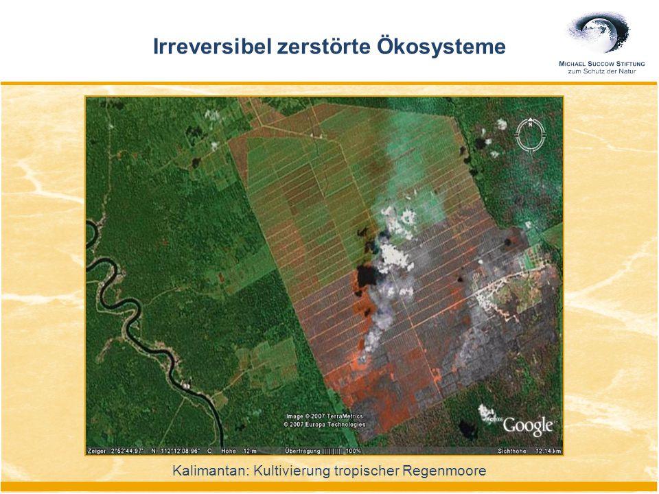 Kalimantan: Kultivierung tropischer Regenmoore Irreversibel zerstörte Ökosysteme
