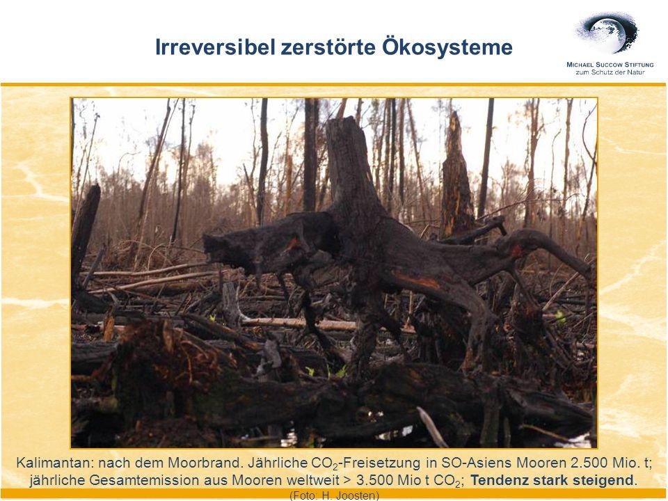 Kalimantan: nach dem Moorbrand. Jährliche CO 2 -Freisetzung in SO-Asiens Mooren 2.500 Mio. t; jährliche Gesamtemission aus Mooren weltweit > 3.500 Mio